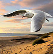 Gull On The Wing Over Beach Landscape Art Print