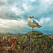 Gull Over Rome Art Print by Jack Zulli