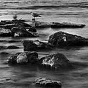 Gull Rock Art Print