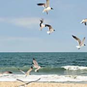 Gulls A Dance'n Art Print