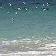 Gulls Flying Over The Ocean Art Print