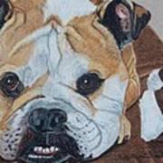Gus - English Bulldog Commission Art Print