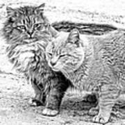 Gutter Kitties Four Art Print