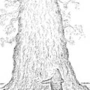 Guy Hugging A Giant Tree And Speaks To It Art Print
