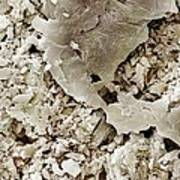 Gypsum Crystals Sem Art Print