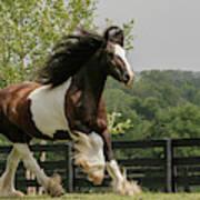 Gypsy Vanner Horse Running, Crestwood Art Print