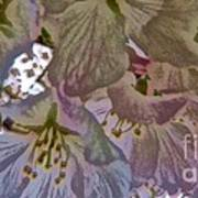 H Cherry Blossom Cont L Art Print