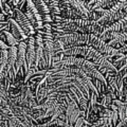 H Ferns Cont Z Art Print