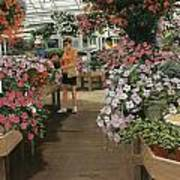 Haefner's Garden Center Impatiens Art Print