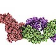 Haemagglutinin Viral Surface Protein Art Print