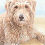 Hairy Sheepdog Watercolor Portrait Art Print