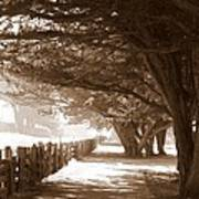 Half Moon Bay Pathway Art Print