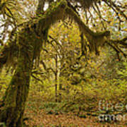 Hall Of Mosses 5 Art Print