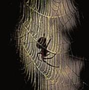 Halloween - Spider Art Print