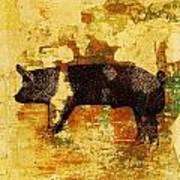 Swedish Hampshire Boar 4 Art Print