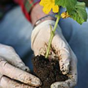 Hands Planting Plant Art Print