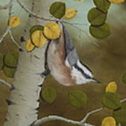 Hanging Around-red Breasted Nuthatch Art Print