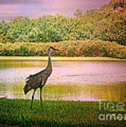 Hanging Around The Beautiful Florida Sand Crane Art Print