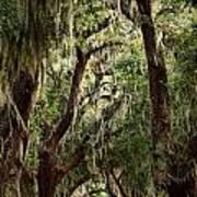 Hanging Moss And Giant Oaks Art Print