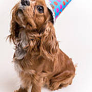 Happy Birthday Dog Art Print by Edward Fielding