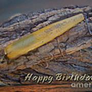 Happy Birthday Greeting Card - Vintage Atom Saltwater Fishing Lure Art Print