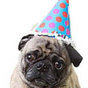 Happy Birthday Pug Card Art Print
