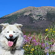 Happy Mountain Dog Art Print