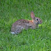 Happy Rabbit Art Print