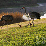Happy Sandhill Crane Family - Original Art Print