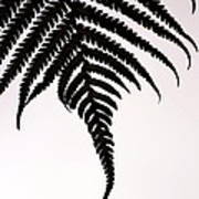 Hapu'u Frond Leaf Silhouette Art Print