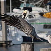 Harbor Pelican And Gull Art Print