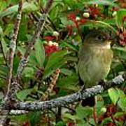 Hardly The Least Least Flycatcher Art Print