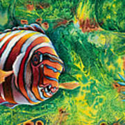 Harlequin Tuskfish Art Print