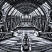 Harry Potter Meets Escher And Darwin. Art Print