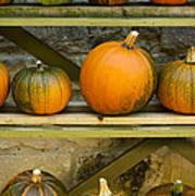 Harvest Display Art Print
