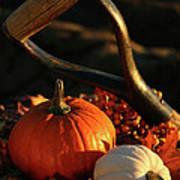 Harvesting For Thanksgiving Art Print