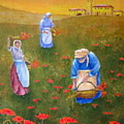 Harvesting Poppies In Tuscany Art Print