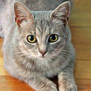Hattie The Kitty Art Print