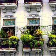Havana Windows Art Print