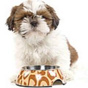 Havanese With Dog Bowl Art Print