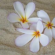 Hawaiian Tropical Plumeria Art Print