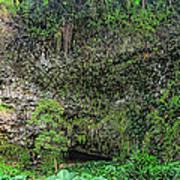 Hawaii Fern Grotto Art Print