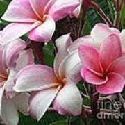 Hawaii Plumeria Art Print