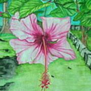 Hawaiian Healing Art Print