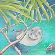 Hawaiian Monk Seal  Art Print