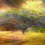 Hawaiian Tree Art Print