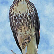 Hawk By Frank Lee Hawkins Art Print