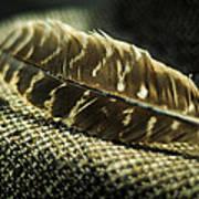 Hawk Feather  Art Print