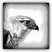 Hawk - Raptor Art Print