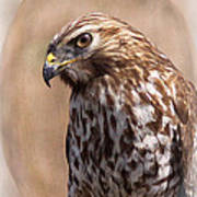 Hawk - Sphere - Bird Art Print